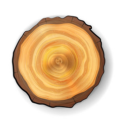 Cross section tree wooden stump realistic vector