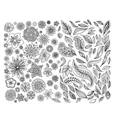 Hand drawn leaves and flowers vector