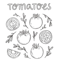 Sketched tomatoes vector image