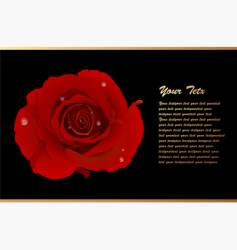 romantic card with red rose vector image vector image