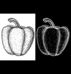 Bell pepper hand drawn sketch vector