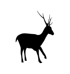 deer silhouette icon design template isolated vector image