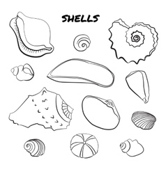 Set of hand drawn shells vector
