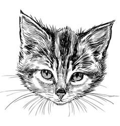 sketch head a small kitten vector image