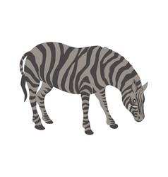 zebra caroon vector image