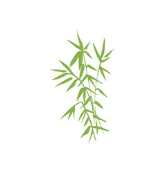Bamboo plant isolated vector