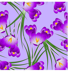 purple crocus flower on light violet background vector image