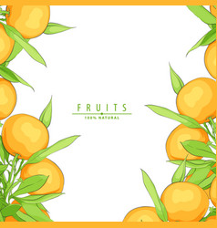 ripe fresh oranges vector image
