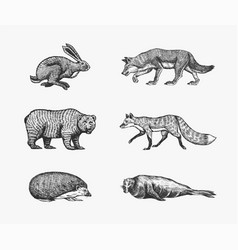 forest animals bear grizzly wolf and red fox vector image