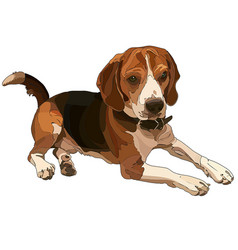 lying brown beagle vector image