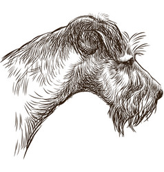Sketch portrait an old airedale terrier vector