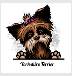 yorkshire terrier - peeking dogs - breed face head vector image