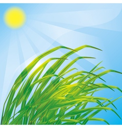 Spring background with fresh grass vector image