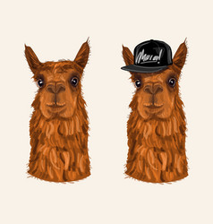 alpaca hipster character vector image