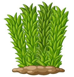 Tall grass on ground vector