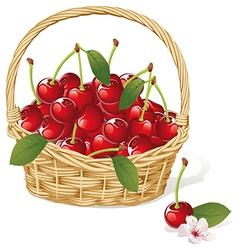 cherry basket vector image vector image