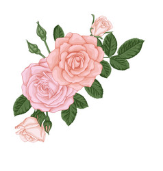 beautiful bouquet with pastel pink roses buds and vector image