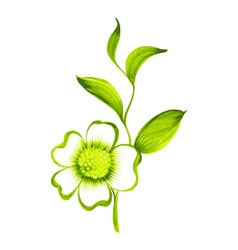 branch of green tea with flowers and leaves vector image