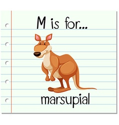 Flashcard letter M is for marsupial vector