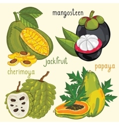 Fresh fruit mix isolated vector