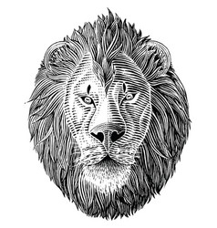 lion head hand draw vintage engraving black vector image