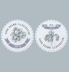 monochrome labels design with iris vector image