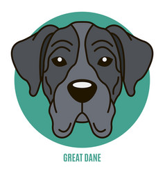 Portrait of great dane vector