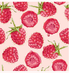 Raspberry seamless pattern vector