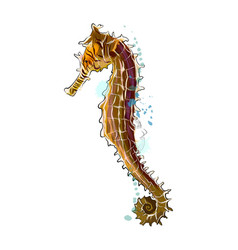 sea horse from a splash watercolor colored vector image