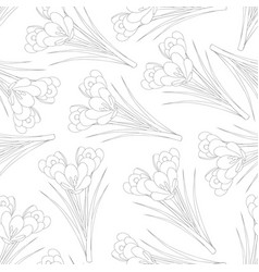 white crocus outline on white background vector image