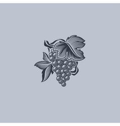 Grape with leaf - element for design vector