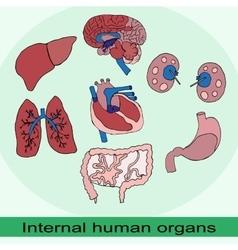 internal organs of the human set vector image