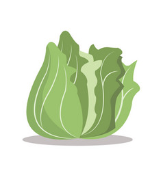 Lettuce nutrition healthy image vector