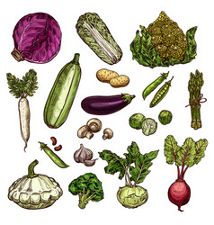 set of vegetable icons vector image vector image