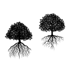 Two trees showing different root systems vector image vector image