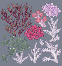 Colored corals set vector
