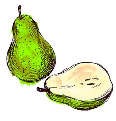 Colored hand sketch pears vector image