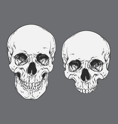 line art human skulls set isolated vector image vector image