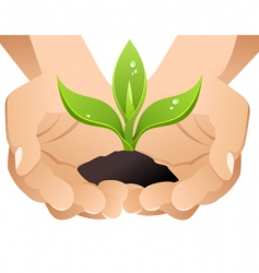 hands with sprout vector image