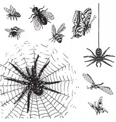 set of antique insects engravings vector image vector image