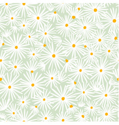 beautiful white daisies on mint background vector image