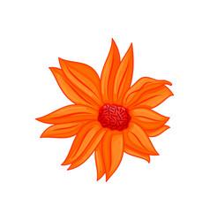 Floral botanical flower ornament orange vector