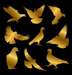 Golden dove silhouettes isolated on black vector