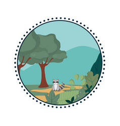 Raccoon in the forest vector
