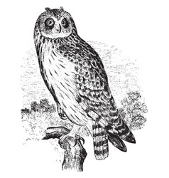 Short eared owl vintage vector