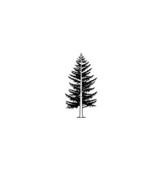 tree spruce larch black on white background vector image