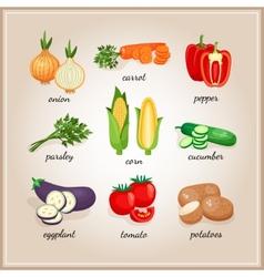 Vegetables ingredients vector