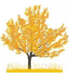 cherry tree in autumn vector image