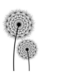 beautiful spring and summer flower dandelion vector image vector image
