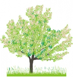 cherry tree in spring vector image vector image